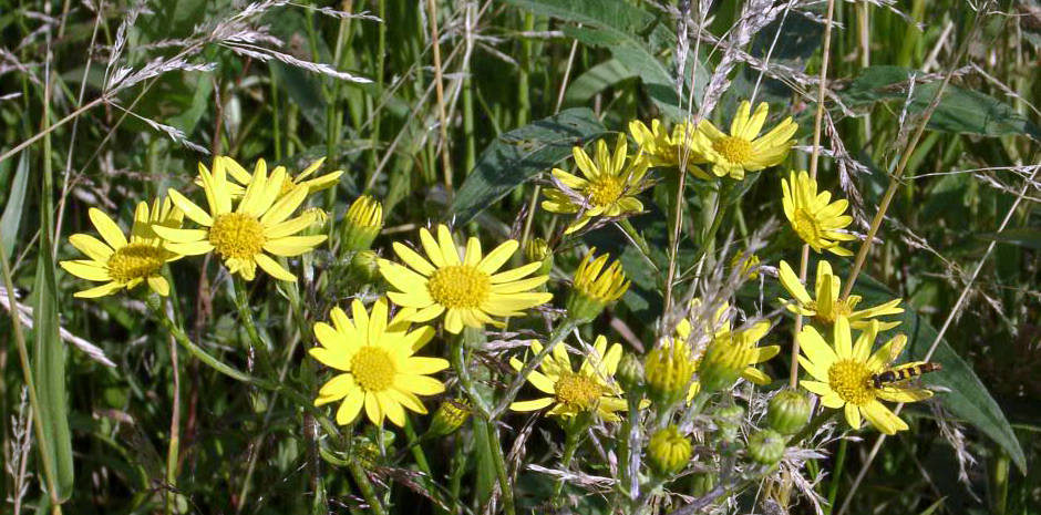 De flora en vegetatie