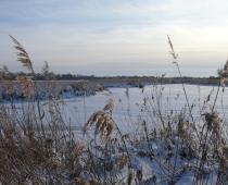 Wintervoedering fauna
